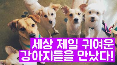 세상에서 제일 귀여운 강아지들을 만났다 : 렛츠봄봄입양파티