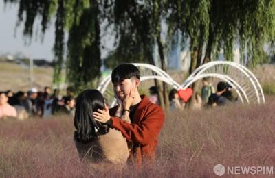 [사진] 2018 서울억새축제에는 핑크뮬리도 있어요