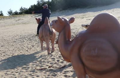 [영상] 대청도에는 사막이 있다? '옥죽동 모래사막'