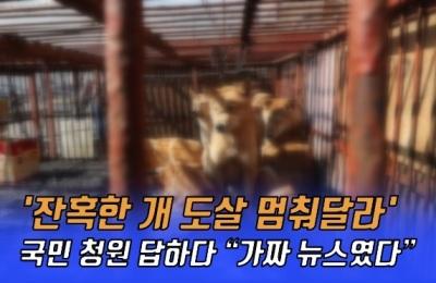 [영상] 약 21만명이 동참한 '잔혹한 개 도살 멈춰달라' 국민청원 글은 가짜였다