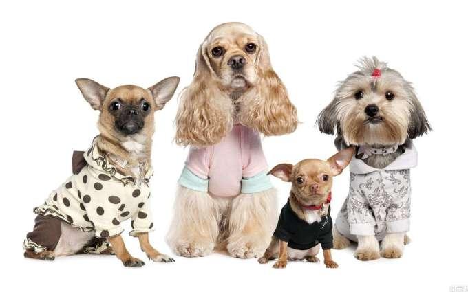 뉴스핌 - 개와 고양이와 사는 14억의 중국인, 사료 간식 병원 장례, 반려동물시장 폭풍성장