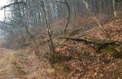 [영상] 화성 장지저수지 부근 의도적 나무고사화...대안마련 '시급'