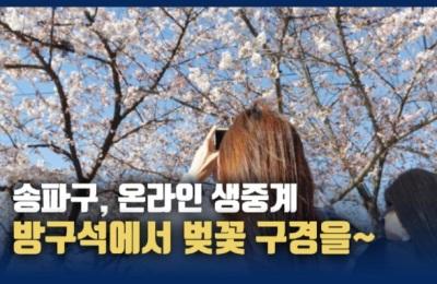 방구석에서 보는 석촌호수 벚꽃