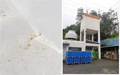 대구시 수돗물 유충 의심신고…'나방파리' 유충 확인