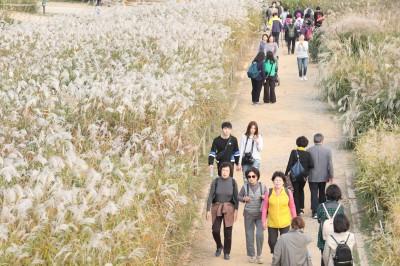화창한 가을 날씨, 하늘공원 서울억새축제