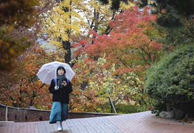 알록달록 늦가을, 비오는 풍경