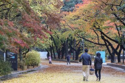 가을의 끝자락,  단풍~낙엽과 함께