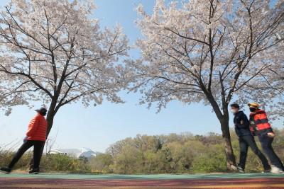 봄 만끽 '사회적 거리두기는 필수'