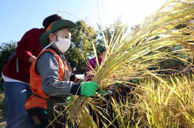 꼬마 농부들의 벼 베기 체험