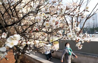 '봄봄봄이 왔어요'