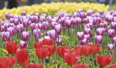 2021 서울식물원 봄꽃 전시